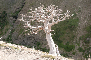 Stark tree on a mountain slope