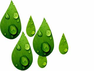 Gotas de agua de hojas con gotas de rocío