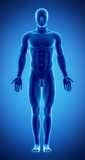 Male figure in anatomical position in blue x-ray poster