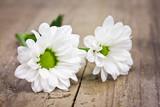 weisse Blüten - Fine Art prints