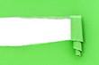 Feuille verte déchirée fond blanc