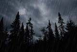 Rainstorm in forest