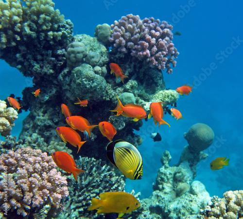 Fotobehang Koraalriffen Tropical life