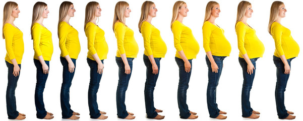 Pregnancy stages / weeks collage isolated on white