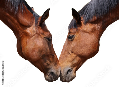 Fototapeten,pferd,liebe,schön,double o arch