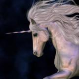 Fototapety Stallion