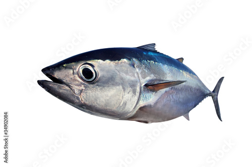 Bluefin tuna isolated on white background real fish