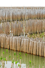 Bamboo wall in mangrove education center at Samut Sakhon, Thaila