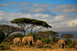 Elephant family in front of Mt. Kilimanjaro - 34914448