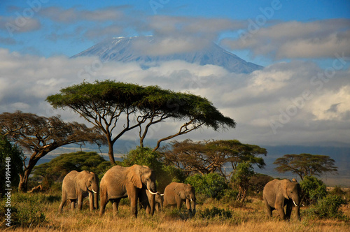 Canvas Afrika Elephant family in front of Mt. Kilimanjaro