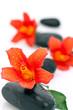 Galet zen et fleurs d'hibiscus
