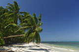 Deserted palm-fringed  tropical beach poster