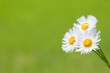 flower[philadelphia]_02