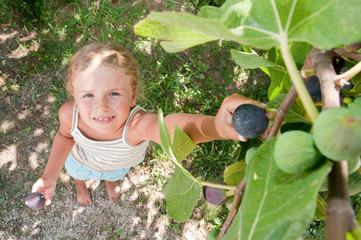 Little girl picking ripe figs