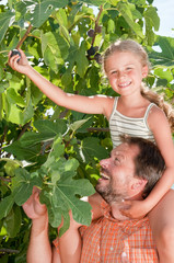 Father with daughter picking ripe figs