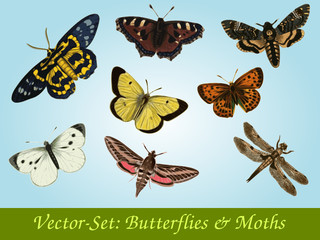 Butterflies & Moths Vector-Set