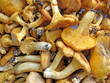 edible mushroom heap, chanterelle, forest fungus