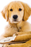 cute dog with soft fuzzy slippers poster