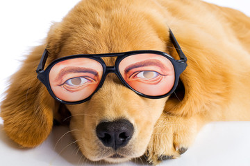 funny dog with silly novelty glasses