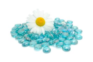 Daisy Flower on Blue Glass Stones Isolated on White Background