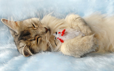 Cat sleeps holding a toy mouse