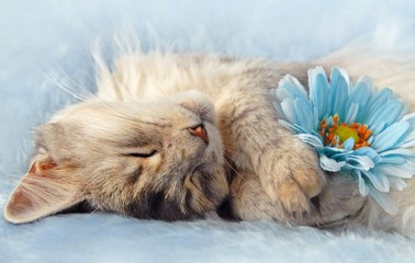 cat sleeping holding a flower