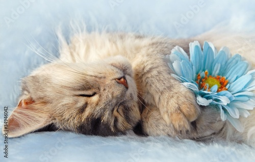cat sleeping holding a flower