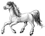 Horse sketch - 34956827