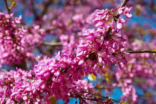 fioletowe-wiosenne-kwiaty
