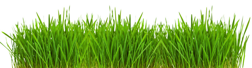 Grass borde