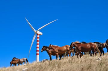 wind generator and horses