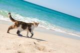 Fototapety Сat walks on the beach