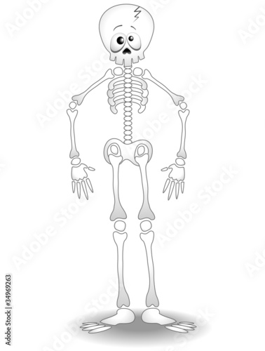 Scheletro Umano Cartoon-Human Skeleton Anatomy-Vector