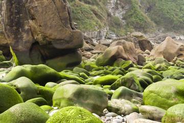 Algas verdes en las rocas #3