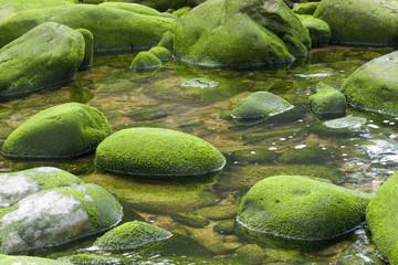 Algas verdes en las rocas #2