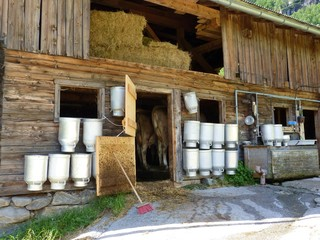 Kuhstall mit Milchkannen