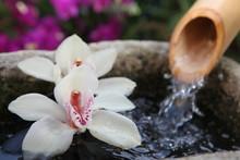 la source et l orchidée