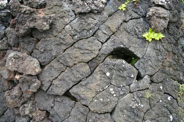 roca + plantas 2