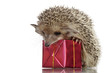 hedgehog on box,