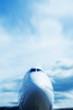jumbo jet take off