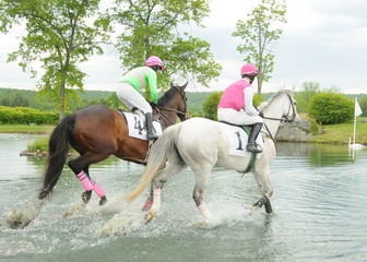 Two Race Horses in Water