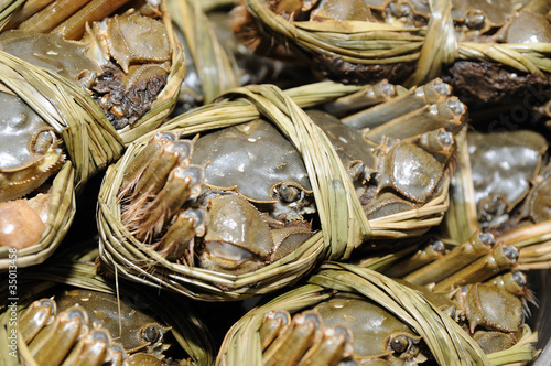 Close up of shanghai crabs