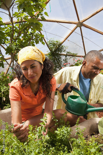 Woman and man watering plants in greenhouse