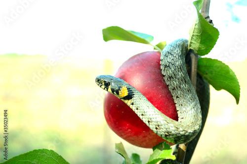 serpent tempter