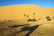 Shadow of camel on desert sand