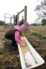 Caucasian girl placing grain in trough