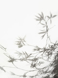 Shadow of olive branches and leaves
