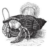 Hermit crab dragging Sea anemones, vintage engraving. poster