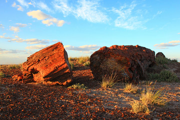 Blue sky over petrified forest