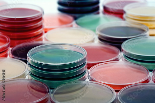 Petri plates collection